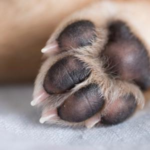 日々のケアで愛犬の安全な生活を守りましょう!