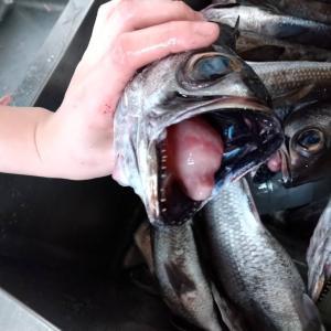 炙りお造りのお魚