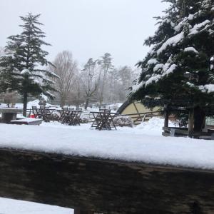 昨日の雪!