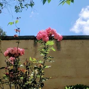 風が涼しくて青空が広がる清々しい天気(自粛要請・南カリフォルニア)