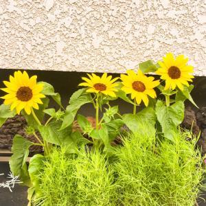 庭の花 part3