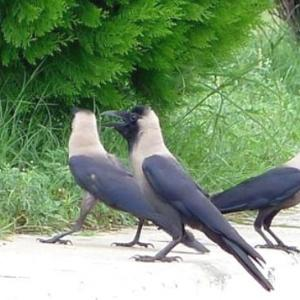 三千世界の鴉を殺し主と朝寝がしてみたい