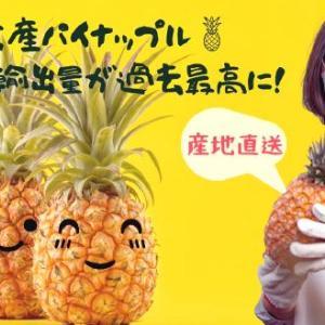 台湾パイナップル、完売です