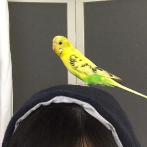 レモンちゃんから身を守る