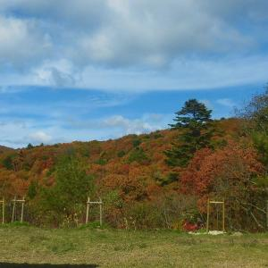 もみの木森林公園の紅葉!