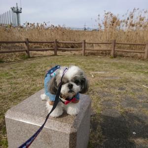 公園散歩&お花♪