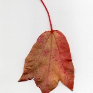 やっとWi-Fiがつながりまして。秋ですか。〔写真〕