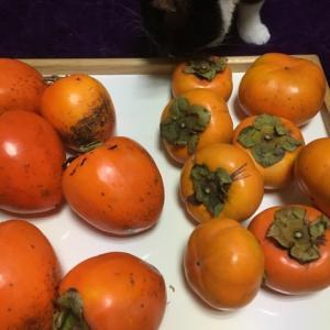 柿、サザンカ、ヤブツバキ。〔写真〕〔スケッチ〕