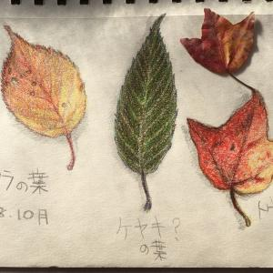 落ち葉もかぼちゃのニョッキも散る。スタンプとモデル猫。〔スケッチ〕〔写真〕
