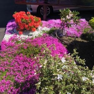庭の花が満開です♪