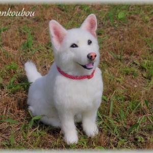 ★ミックス犬★羊毛フェルト