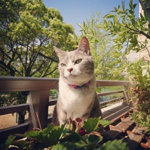 家猫こめ:ベランダ猫