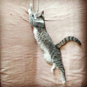 家猫こめ:お昼寝