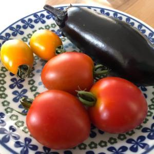 お野菜の収穫シーズン!