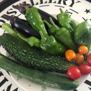 本日の野菜の収穫!