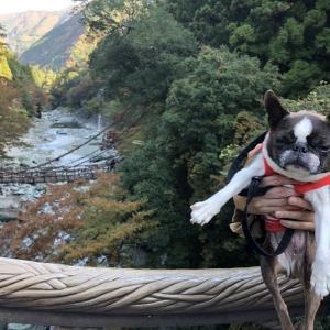 思い立って、四国旅行♪(2)