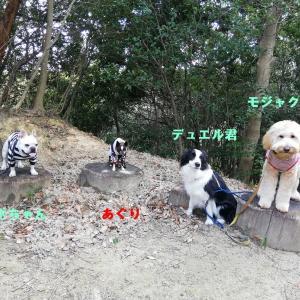 甲山森林公園 de 山ん歩