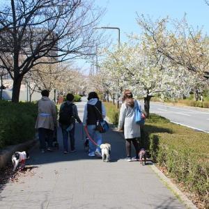 あぐり島 de お花見散歩♪