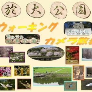 於大公園の花 : 八重桜ショウゲツ ・・・ おだい祭りは中止ですが八重桜は順調に咲き始めています。