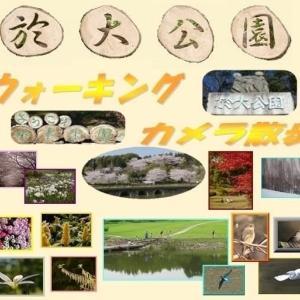 於大公園の花 : ウコンザクラ・・・ツバメがやってきて巣作りを始めていました。