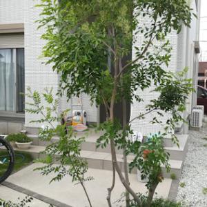 ばっさばっさ:庭木の剪定