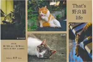 企画展「That's 野良猫 life」に参加します。