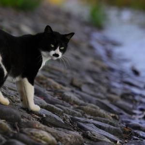 四人展「That's 野良猫 life」始まります。