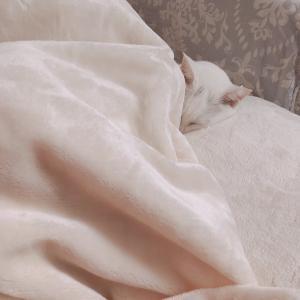 眠り姫に赤頭巾に女帝