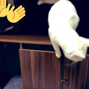 棚と絵本とネコ
