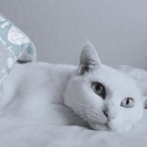 ニンゲンとネコとベッド