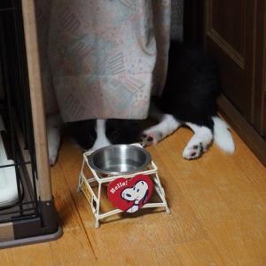 ☆変わらぬ行動は犬か、ヒトか☆