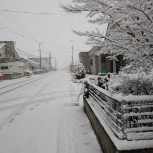 おはようございます。朝6時半。一転、真冬!