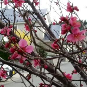 ついに全国?でも、春の味覚をちょっぴり・・・。