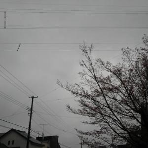 おはようございます。朝6時です。雨~(泣)