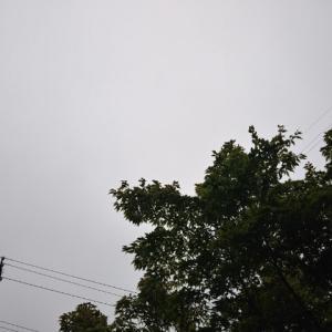 おはようございます。朝六時半。どんより曇り空。