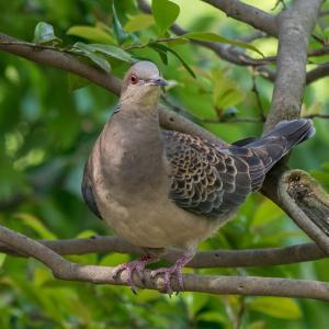 身近な鳥達をちゃんと撮る。