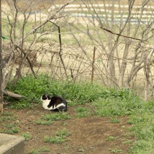 猫の居る風景