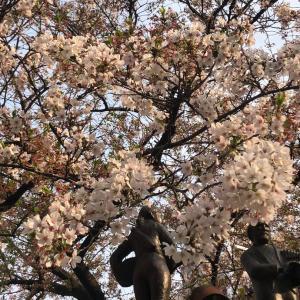 桜と聖蹟桜ヶ丘のグランドリニューアルオープン