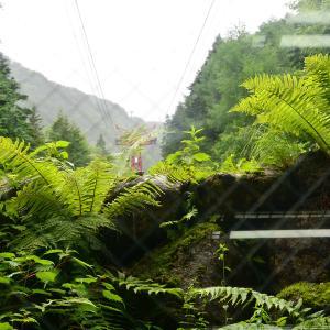 2019-07-20 極楽平(木曽駒ヶ岳) 1
