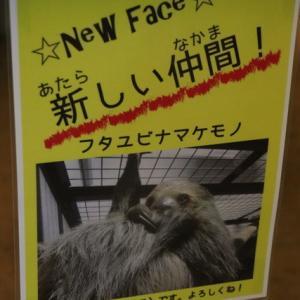 はじめまして♪ 京都のナマケモノ パチパチくん