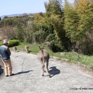 尾道のロバ牧場 春の思い出~その2