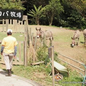 尾道のロバ牧場再訪(2020/9)~その4 ジロちゃんおねむの時間