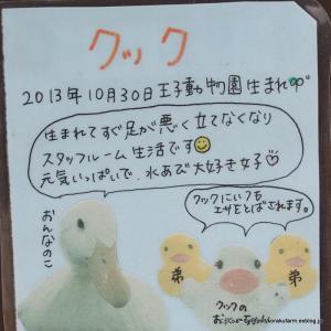 アヒルのクックちゃん 7歳のお誕生日おめでとう!
