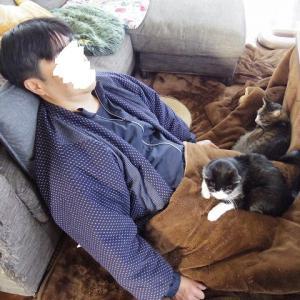 内猫、外猫、うち人間