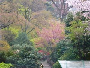 美しき(!?)」着物姿でお花見・椿山荘にて