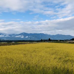 稲刈り風景(2019.10.15)