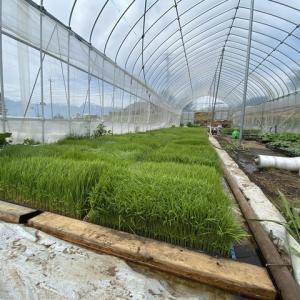陸稲と半農半X