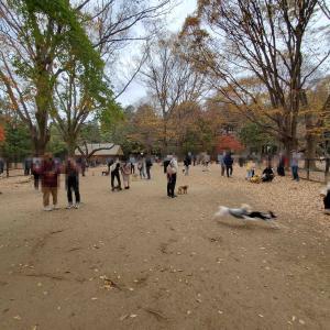 11月23日代々木公園ドッグラン