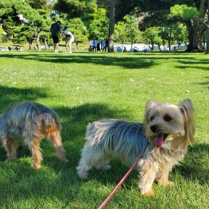 皇居外苑の芝生広場でのんびり