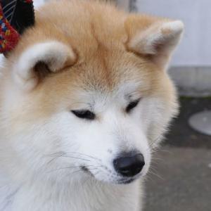 お散歩犬を眺める楽しい時間☆